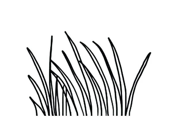 600x450 Grass Coloring Pages Chagarkennels Com Free