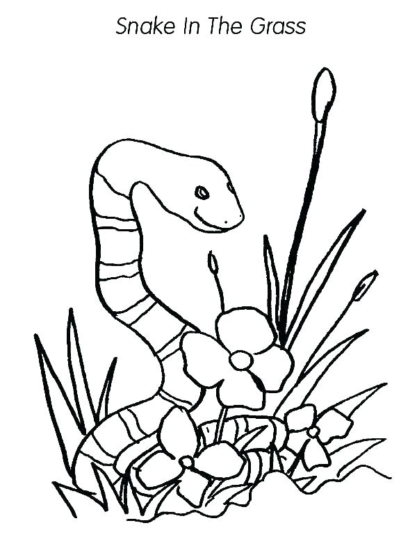 600x776 Grass Coloring Pages Love Shaped Grass Coloring Pages Seagrass