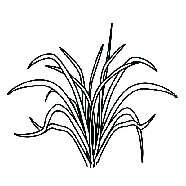 600x600 Grass Coloring Pages Stegosaurus Is Eating The Grass Coloring Page