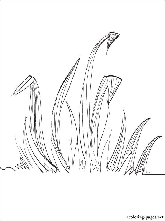 560x750 Grass Coloring Page Coloring Pages