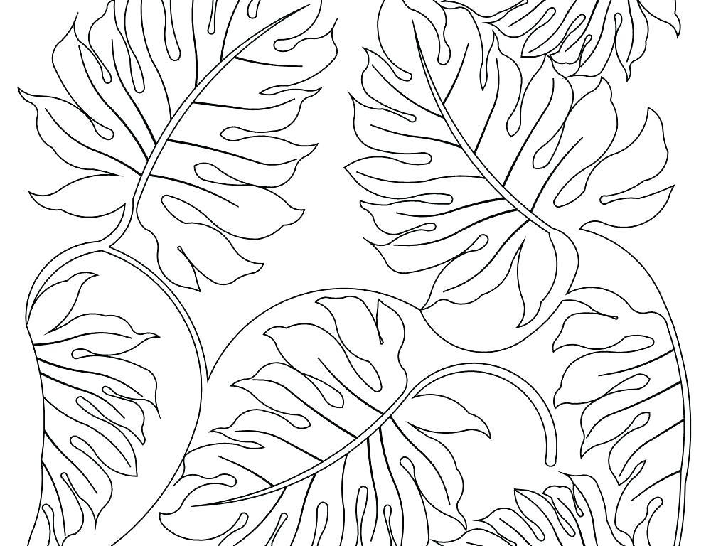 1000x768 Rainforest Plants Coloring Pages Plants Coloring Pages Grass