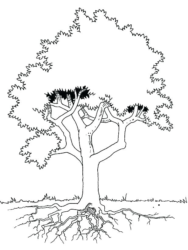 618x822 Free Coloring Pages Trees Kids Coloring Coloring Pages Tree Grass