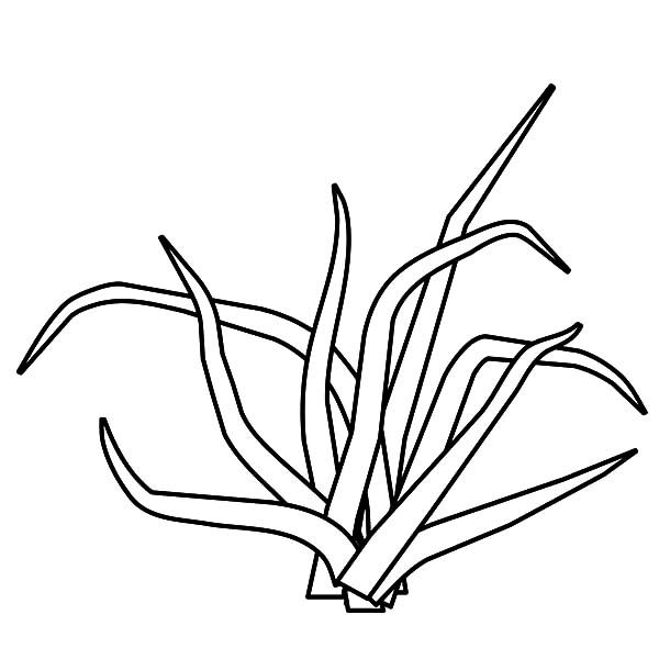 600x600 Free Printable Coloring Pages