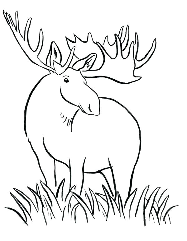 600x775 Grass Coloring Pages