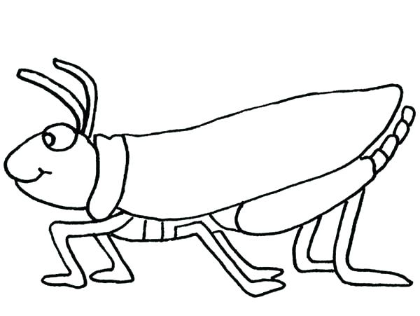 600x451 Grasshopper Coloring Page Young Little Pages Wesmec Site