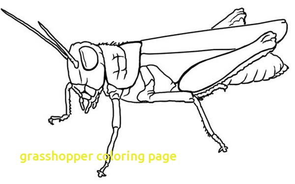 600x375 Grasshopper Coloring Page With Grasshopper Coloring Page Printable