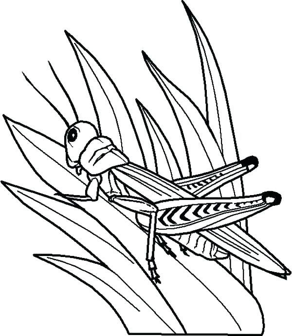 600x689 Grasshopper Coloring Pages Grass Coloring Page Grasshopper