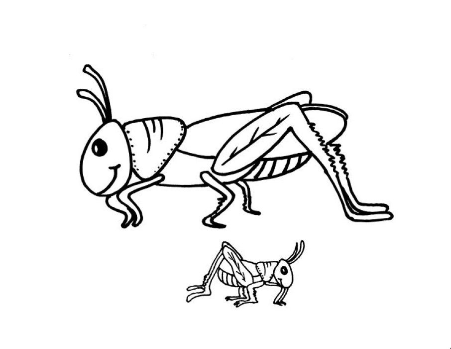 906x700 Grasshopper Coloring Pages Grasshopper Coloring Pages For Kids