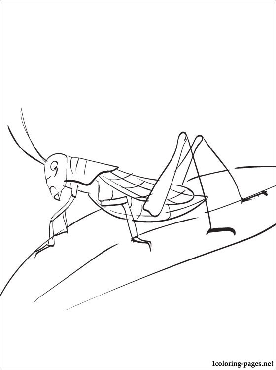 560x750 Grasshopper Coloring Page Coloring Pages