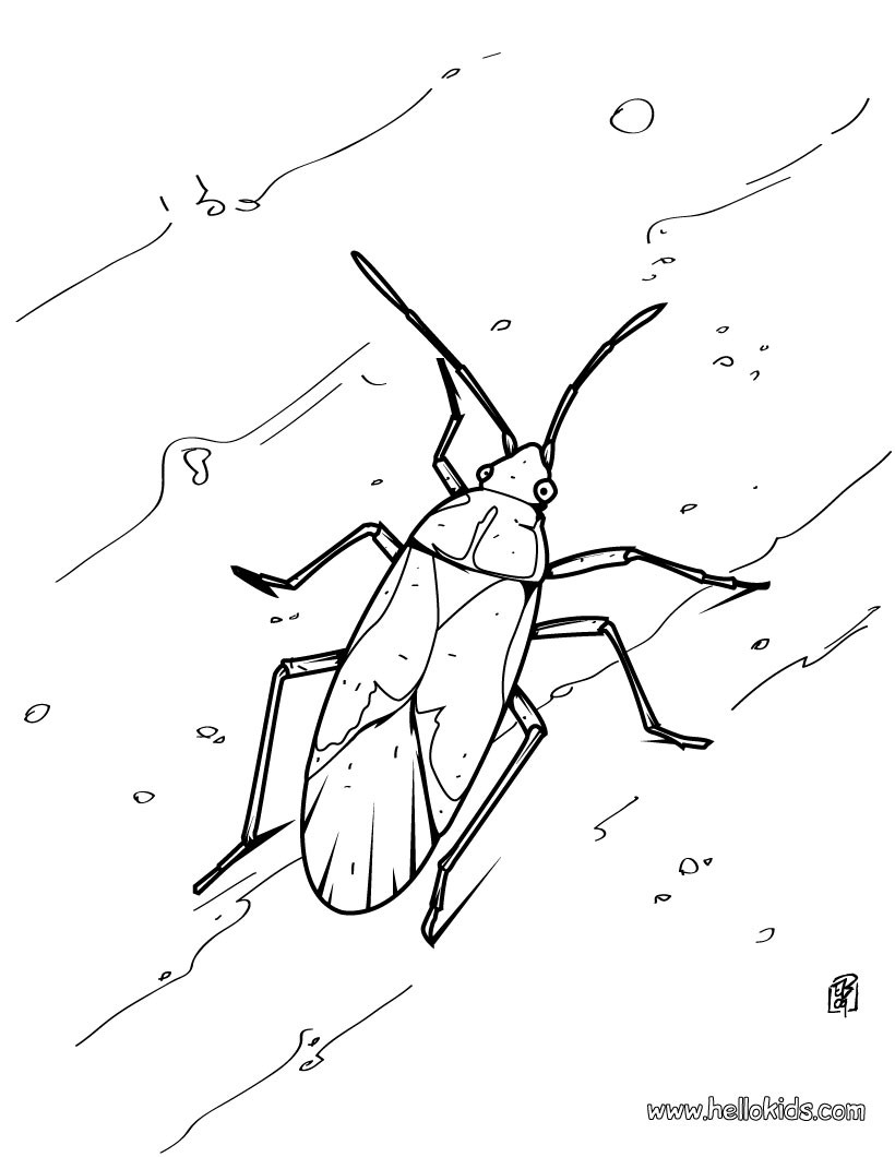 820x1060 Grasshopper Coloring Pages