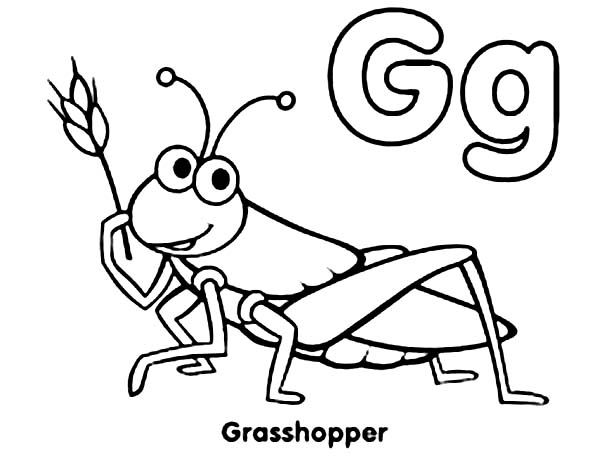 600x470 Grasshopper Coloring Page