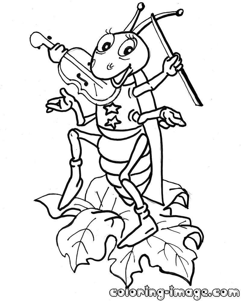 800x1000 Grasshopper Coloring Page