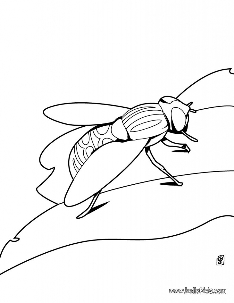 792x1024 Grasshopper Coloring Page