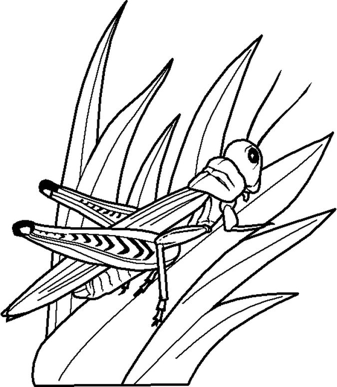 Grasshopper Coloring Pages For Kids