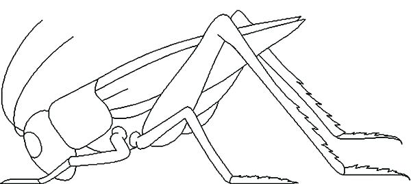600x269 Grasshopper Coloring Page Dead Grasshopper Coloring Page