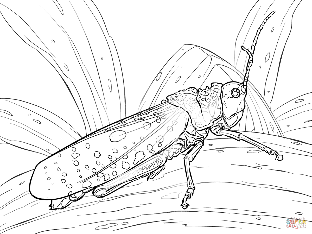 1199x899 Grasshopper Coloring Page Grasshoppers Pages Free
