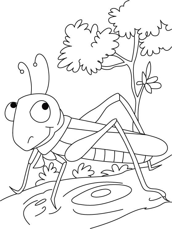 558x740 Grasshopper Coloring Pages For Kids