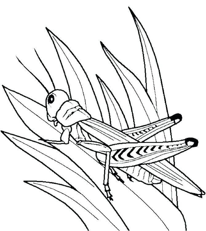 670x750 Grasshopper Coloring Pages Grasshopper And Ant Coloring Page