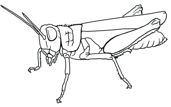600x375 Nice Grasshopper Coloring Page Good Pages Printable Nice