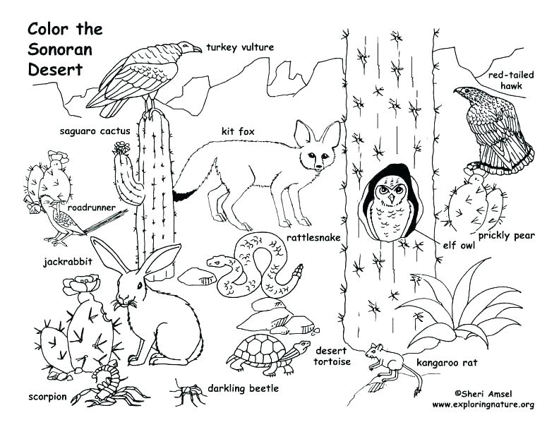 792x612 Grassland Coloring Pages Grassland Animals Coloring Pages Images