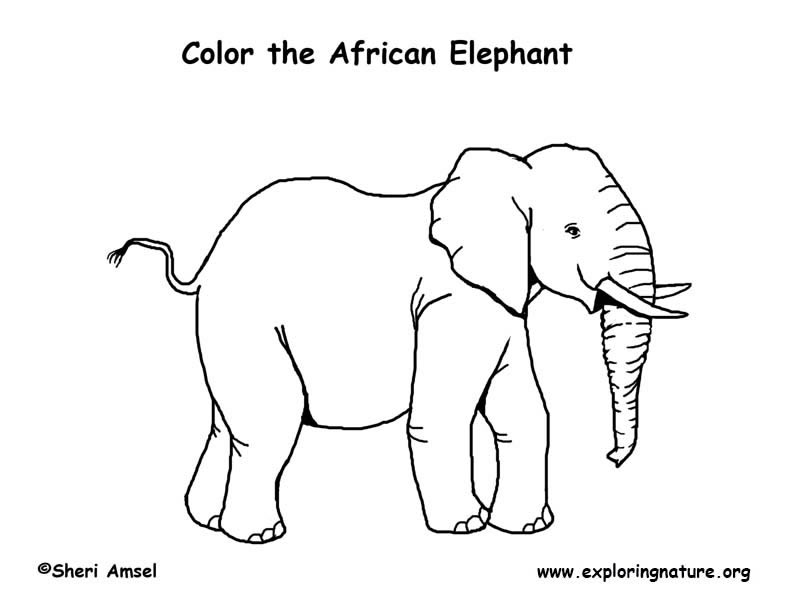 792x612 African Animals Coloring Pages
