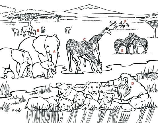 555x432 Grassland Coloring Pages Grasslands Ecosystem Coloring Pages