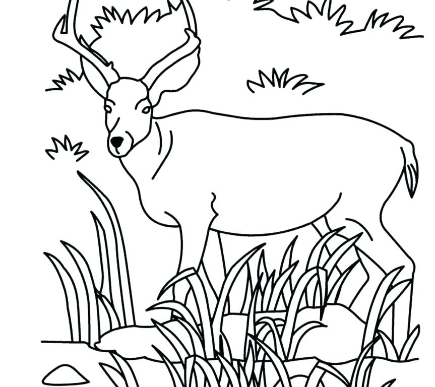 863x768 Grassland Coloring Pages Savanna Animals Coloring Pages Printable