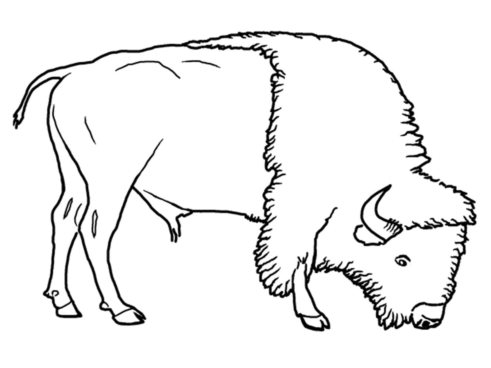 1600x1200 The Best Grassland Coloring Pages For Animal Styles And Sheet