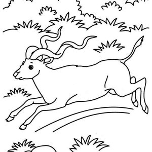 300x300 Adult Grassland Coloring Pages Grassland Coloring Pages Coloring