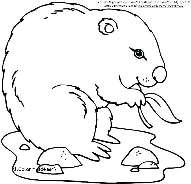 660x636 African Grasslands Coloring Pages Jgheraghty Site