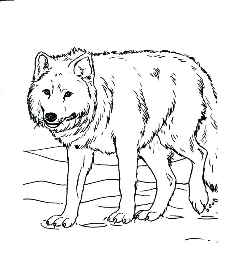728x833 Grassland Coloring Pages