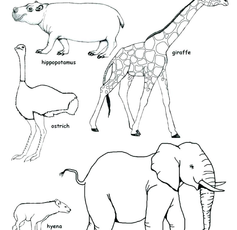 791x768 Grassland Coloring Pages