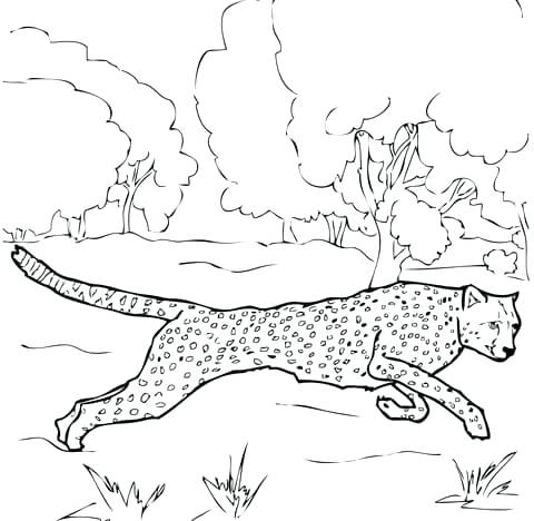 480x468 Grass Coloring Page Coloring Pages Of Trees And Grass Frog