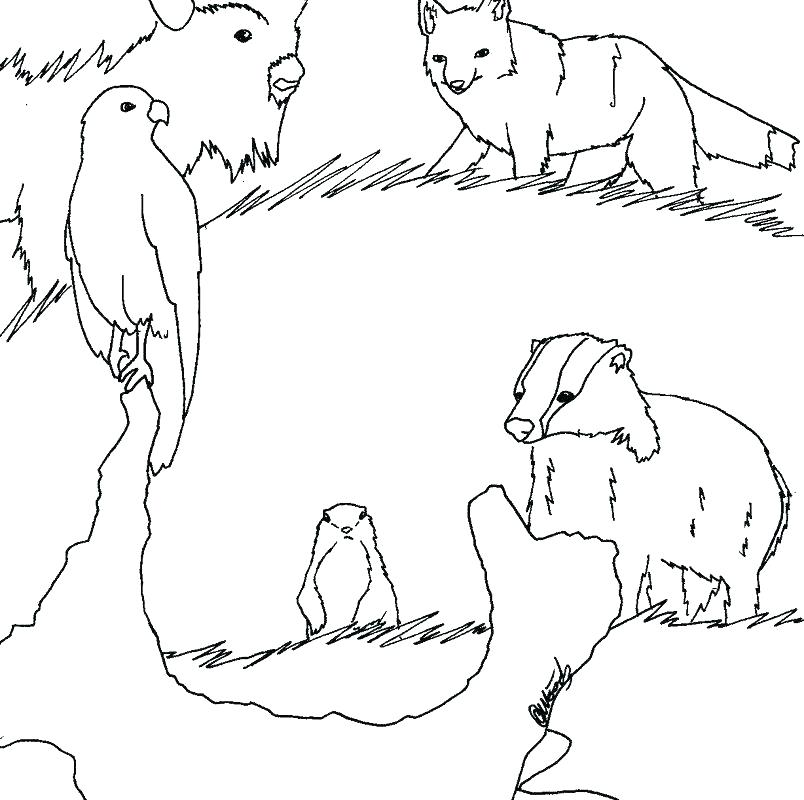 804x800 Grassland Coloring Pages Animal Coloring Pages Savanna Grants