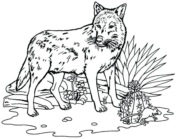 576x448 Free Wolf Coloring Pages Grey Wolf Coloring Pages Wolf Coloring