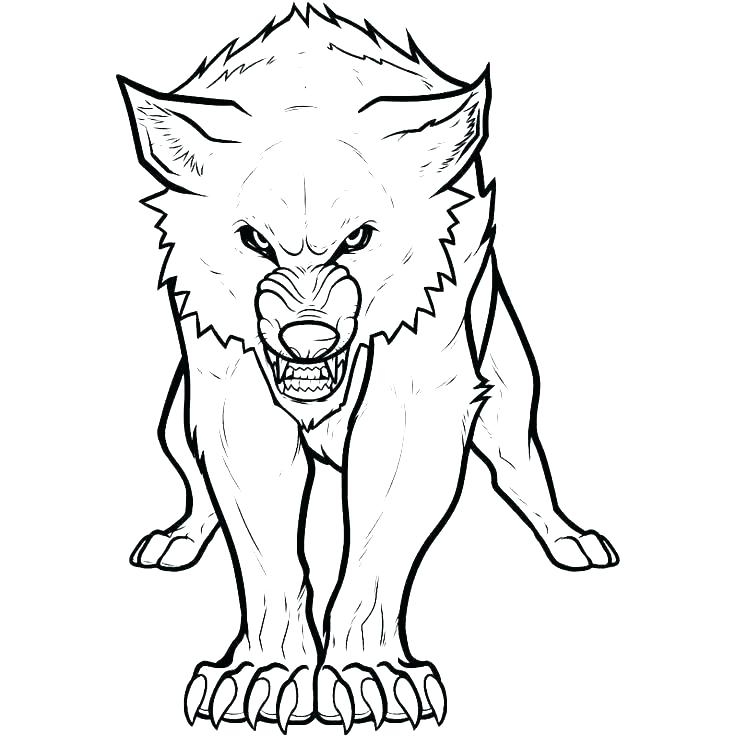 736x736 Grey Wolf Coloring Pages Gray Wolf Coloring Page Wolf Adult Zen