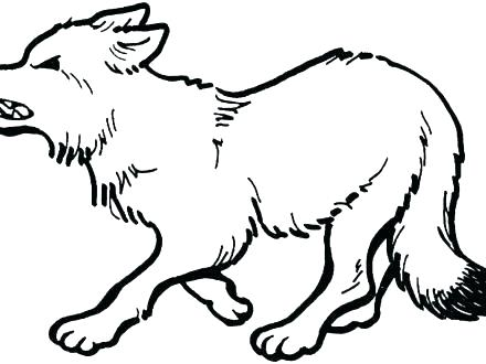 440x330 Grey Wolf Coloring Pages Lovely Grey Wolf Ng Pages Kids Printable