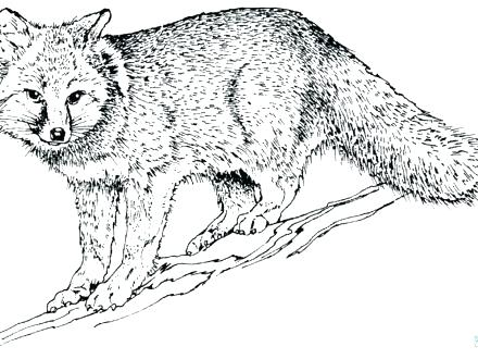 440x330 Grey Wolf Coloring Sheets Printable Coloring Gray Wolf Coloring