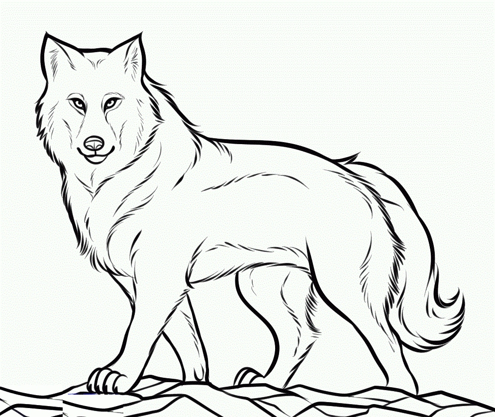 995x839 Wolf Coloring Pages Fresh Running Mexican Grey Wolf Coloring Page