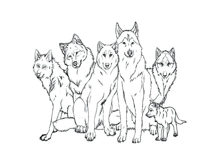 700x525 Gray Wolf Coloring Page Zahlkarte Site