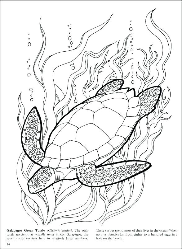 587x800 Coral Reef Coloring Page Great Barrier Reef Coloring Pages Free