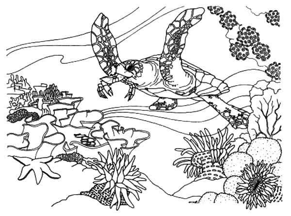 600x446 Coral Reef Fish, Coral Reef Fish Ecosystem Coloring Pages