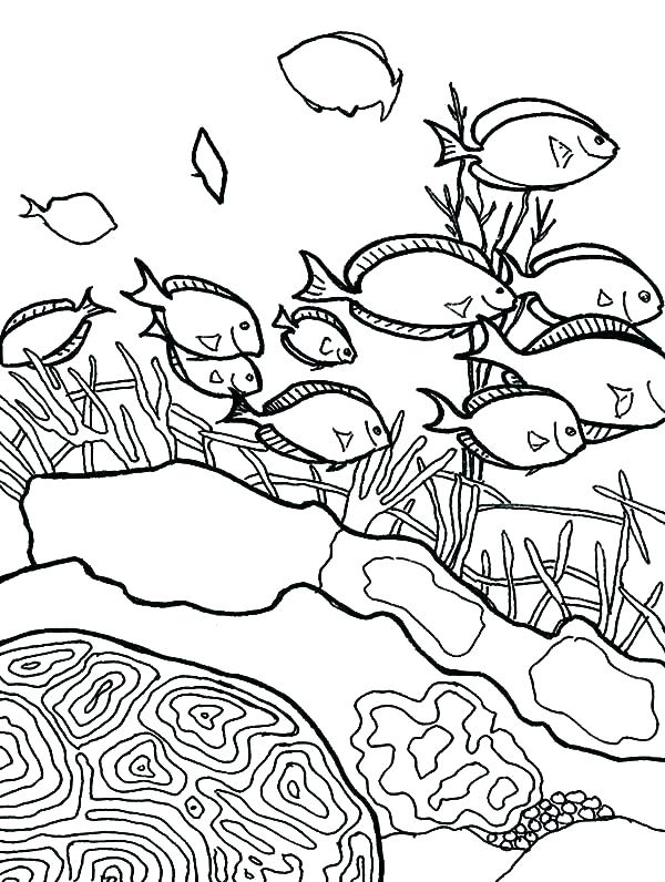 600x796 Free Great Barrier Reef Coloring Pages Coral Ocean Habitat Pin