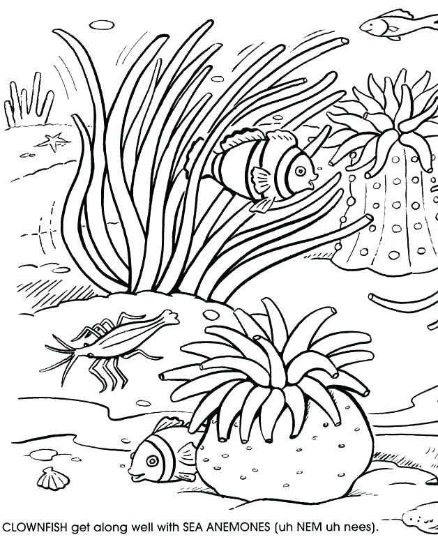 628x770 Great Barrier Reef Coloring Pages Coloring Great Barrier Reef