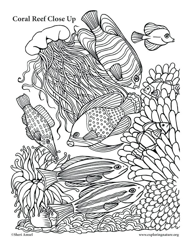 612x792 Great Barrier Reef Coloring Pages Coral Reef Coloring Pages Free
