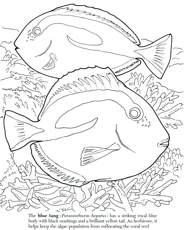 624x780 Ocean Scene Coloring Pages Ocean Fish Coloring Pages Great Barrier