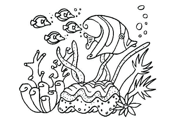 600x422 Coral Reef Coloring Page
