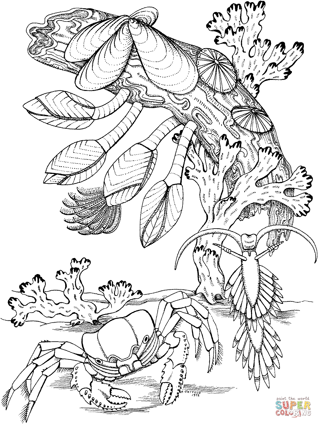 1035x1380 Best Of Simple Coral Reef Coloring Pages Gallery Free Coloring Pages