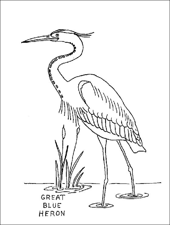 560x737 Coloring Page Great Blue Heron Coloring Pages Tattoo Ideas