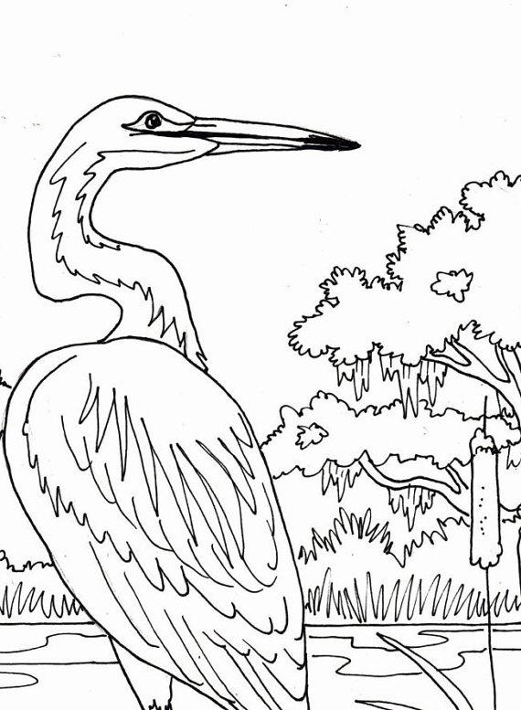 570x777 Egret Coloring Page